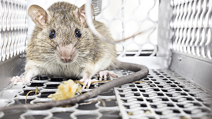 Rodent Control: Actions You Can Take